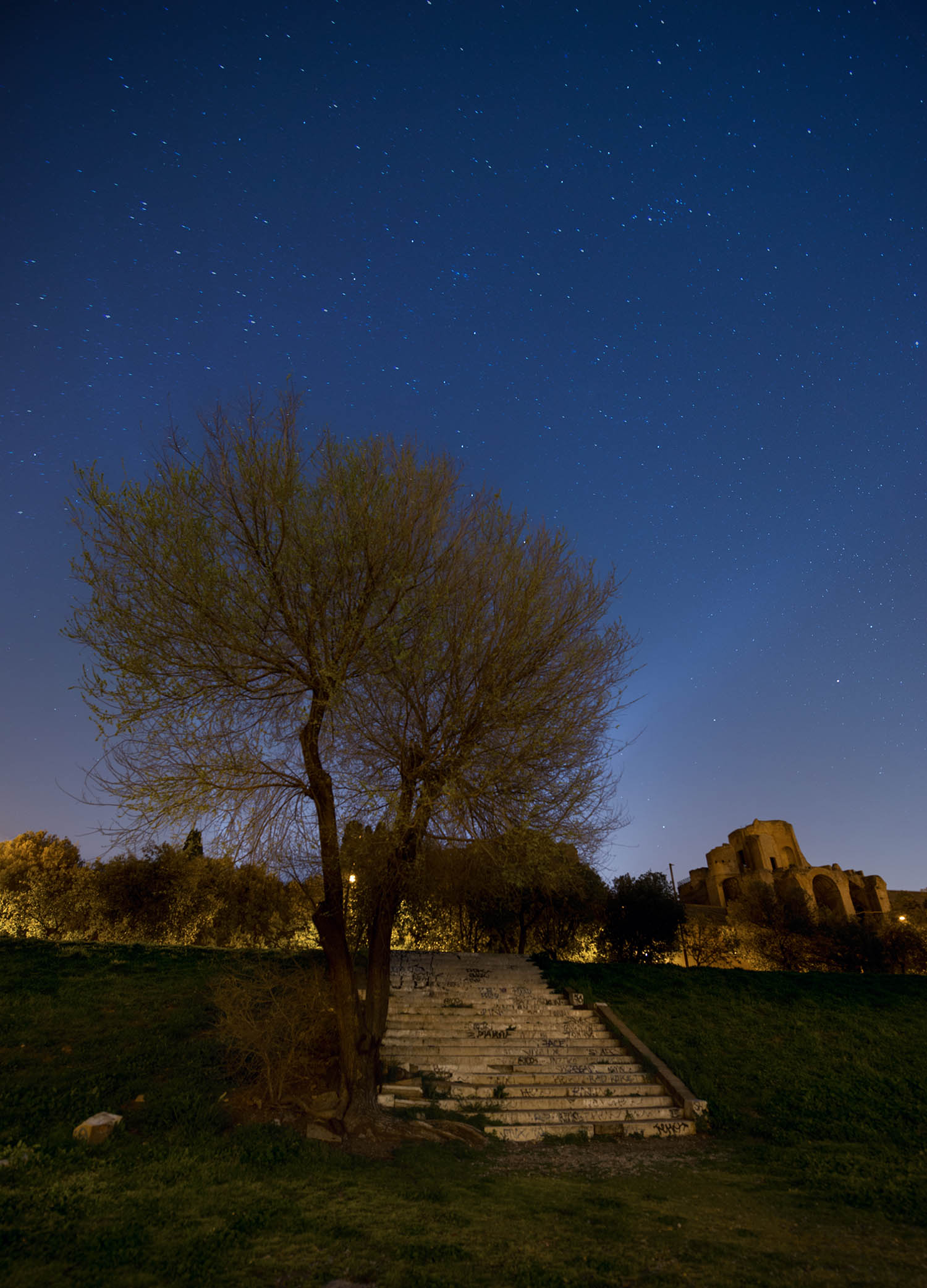 Giuseppe Sapori - Star Tree